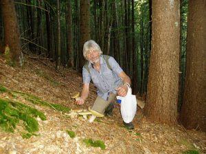 Хочешь и отдохнуть, и заработать — айда в Карпаты за грибами!