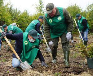 Закарпаття: Мільйон дерев — за добу!