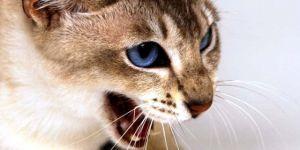 Рівненщина: Мирогощу через сказ у домашнього кота закрили