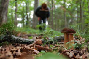 Херсонщина: В лесах исчезают люди