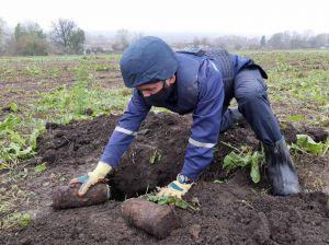 Прикарпатье: Убрали опасный «урожай»