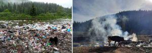 Буковина: Мусор отравляет реки и скот