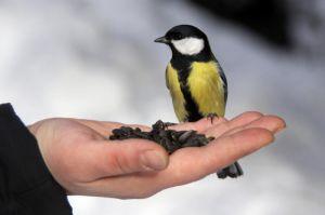 Запорожье: Птиц приглашают в «столовые»