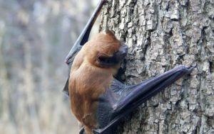Херсон: Спасли краснокнижных животных
