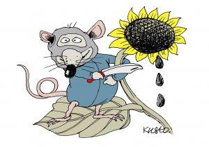 Мышиное нашествие опустошает поля