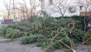 Одесса: Сдашь елку — получишь конфету