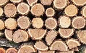 Про ринок... лісових матеріалів