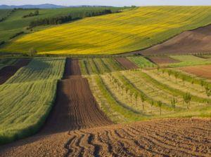 Волинь: Громади отримують землю