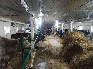 У Марківці з'явилася сімейна ферма