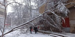 Одесса: Дерево разрушило стену