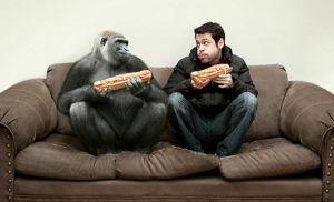 «А хіба люди  не тварини?