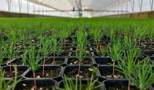 Львовщина: Леса будут выращивать по современным технологиям