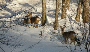 Закарпаття: Лісівники надають туристичні послуги