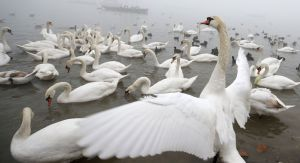 Херсонская область: Массово гибнут  редкие птицы
