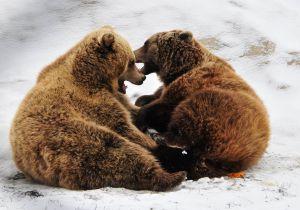 Львовщина: Медвежий приют расширяется