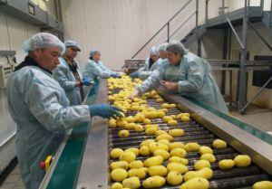 Во Львовской области построят завод по переработке картофеля
