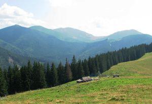На Буковині просять передати у користування ліси
