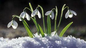 Хмельниччина: З першими квітами — перші штрафи