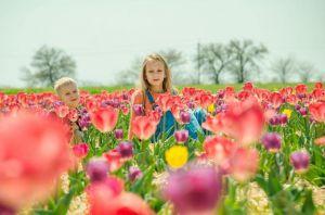 Херсонщина: Коронавірус скасував «Маленьку Голландію»