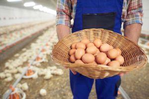 У сільгоспвиробництві Дніпропетровщини зафіксовано піднесення