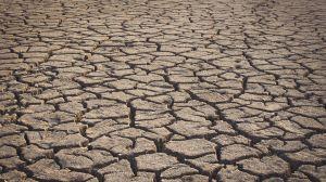 Засуха уничтожает даже деревья
