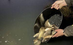 Волынь: Чтобы озера радовали рыбаков