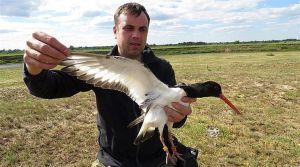 Рівненщина: Сарненський депутат досліджує міграцію птахів