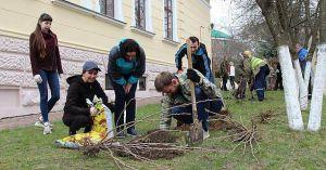 Во Львове возле музея Ивана Франко зацветут мальвы