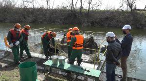Запорожье: Атомщики «приняли на работу» рыбу