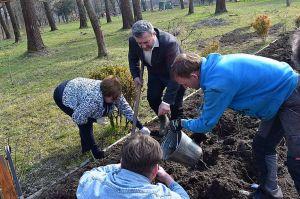 Ривненщина: В Дубно на «Островке» высадили 70 кустов роз