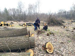 Кіровоградщина: Зупинили незаконну вирубку 225 дубів