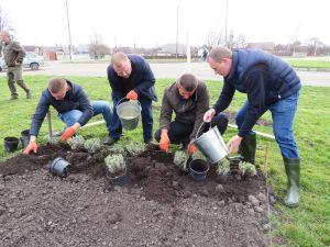 Посади дерево — віднови довкілля