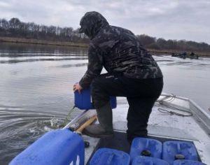 Сумщина: Рыбу подкармливают хлореллой