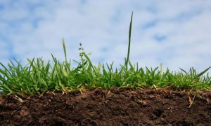 На Запоріжжі чиновники розбазарюють гектари