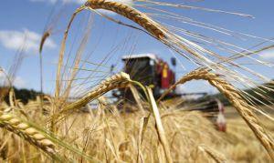Науковці змалювали врожайні сценарії
