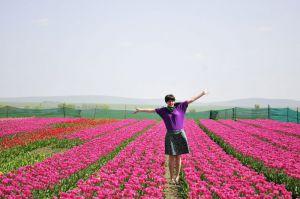 Буковина: Тюльпани зацвітають попри все