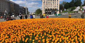 В столице зацвели тюльпаны