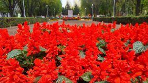 Алею Бойової Слави у Запоріжжі прикрасять десятки тисяч квітів