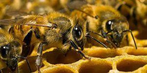 Бджільництво на Луганщині: спочатку — паспортизація, потім — дотація