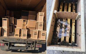 Закарпатье: Погибли миллионы пчел