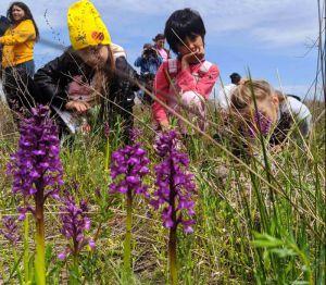 Николаевщина: В поисках диких орхидей
