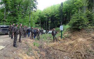 На Львовщине леса станут многоярусными и разновозрастными