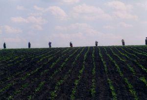 За новый урожай будет отвечать город