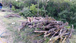Николаевщина: Рубили незаконно лесные насаждения