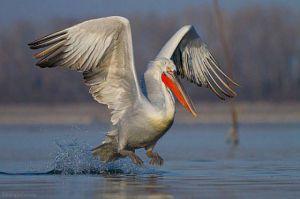 Птицы на Тилигуле