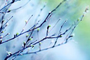 Весна була холоднішою за кліматичну норму