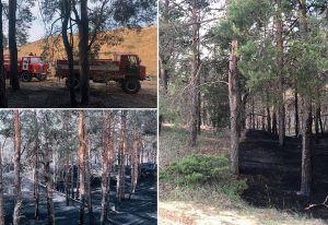 Херсонщина: Блискавки випалюють ліси