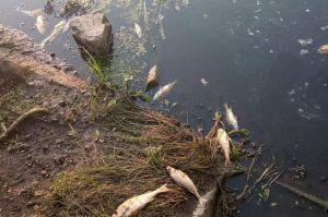 Черниговщина: Рыба гибнет от удушья