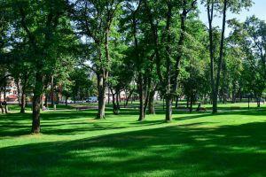 Чернигов: Лучшие озеленители смогут себя увековечить