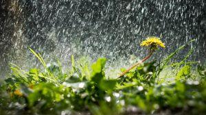 Херсонщина: Мало воды — беда, много — тоже плохо